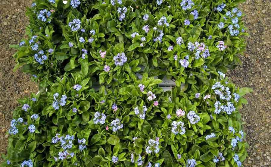 fleurs_du_jardin_du_vievre_a_saint_georges_du_vievre