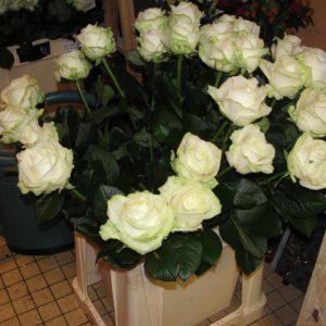 Fleurs naturels