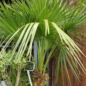 plante d'extérieur