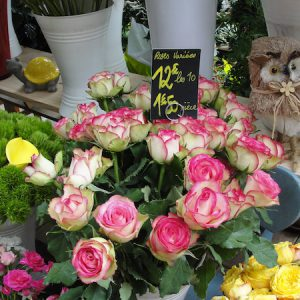 roses variées